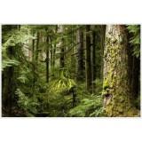 Французские лесные массивы